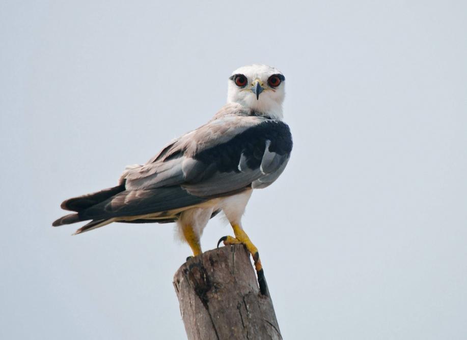 New bird species discovered in Azerbaijan